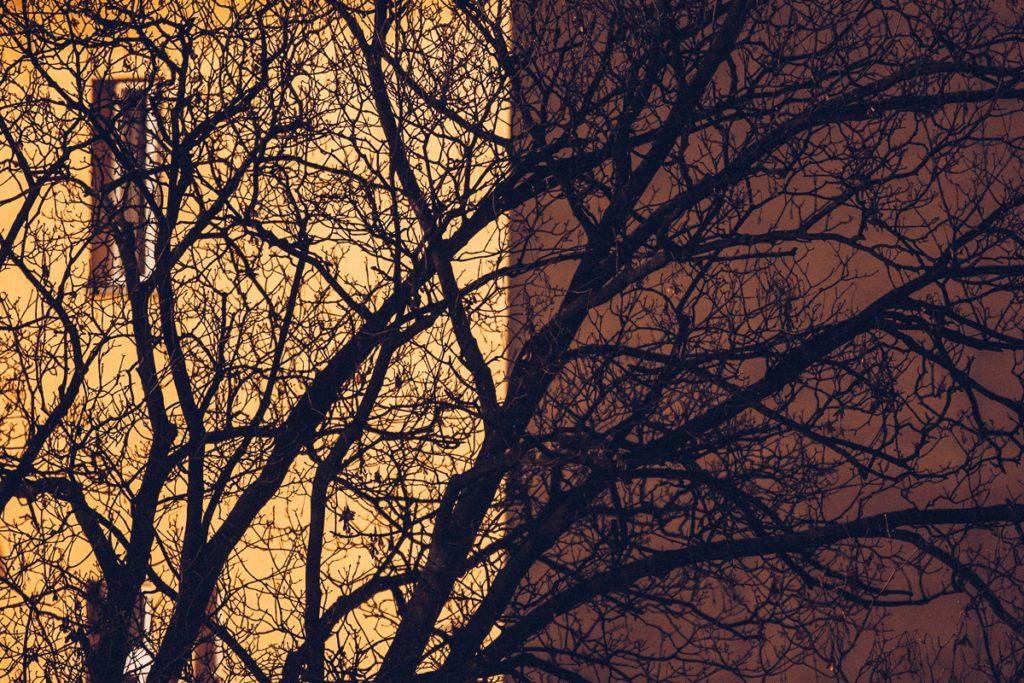 gest w fotografii drzewa